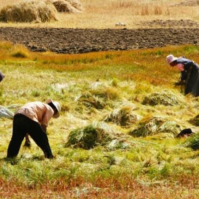 Harvesting farmers